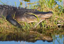 Travel to everglades