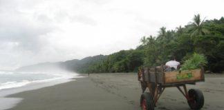 Travel Photo, Image of Carate, Corcavado Rainforest, Costa Rica