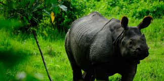 Travel Stories, Experiences, Rhino in Nepal