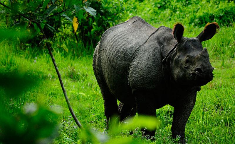 Travel Stories, Experiences, Rhino in Nepal