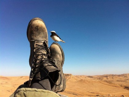 The Road to Dahab | Jerusalem to Egypt