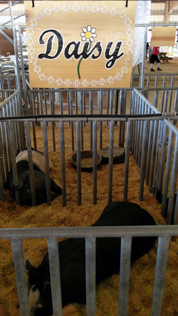 clay county agricultural fair