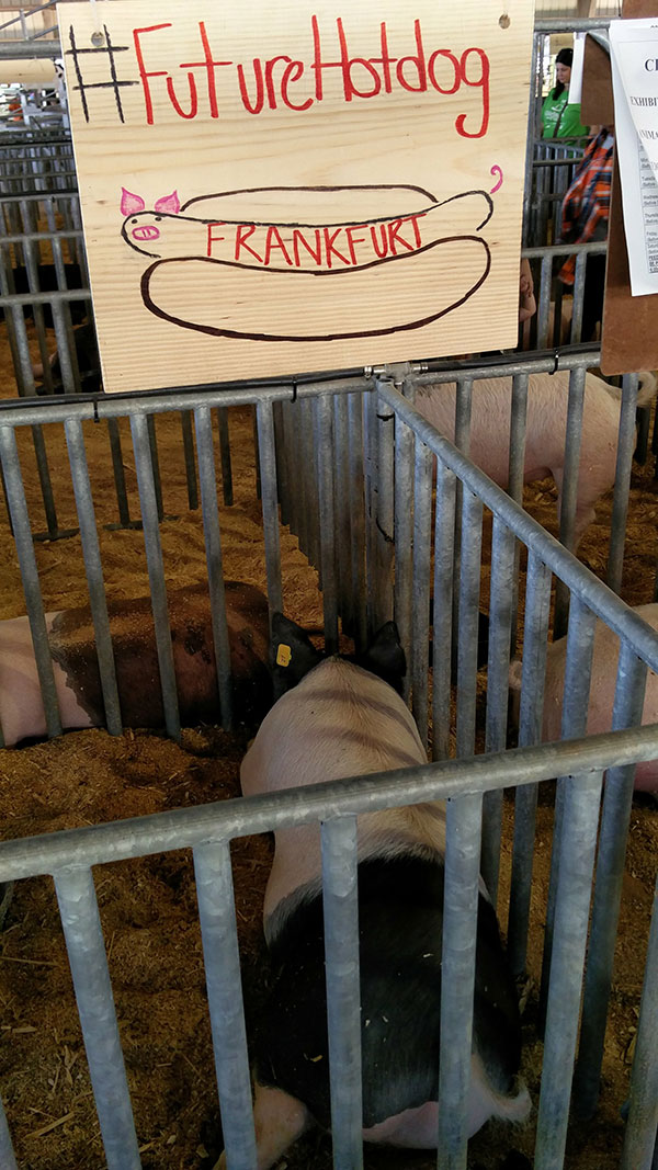 clay county agricultural fair animal
