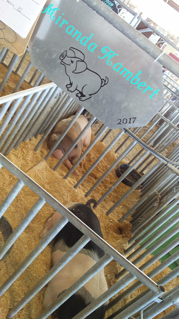 contestant at clay county agricultural fair