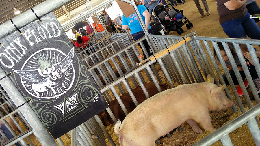 clay county agricultural fair animal exhibit
