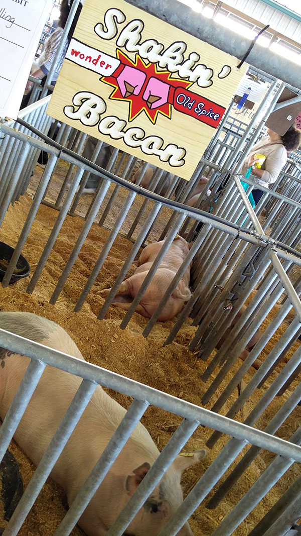 clay county fair livestock exhibit
