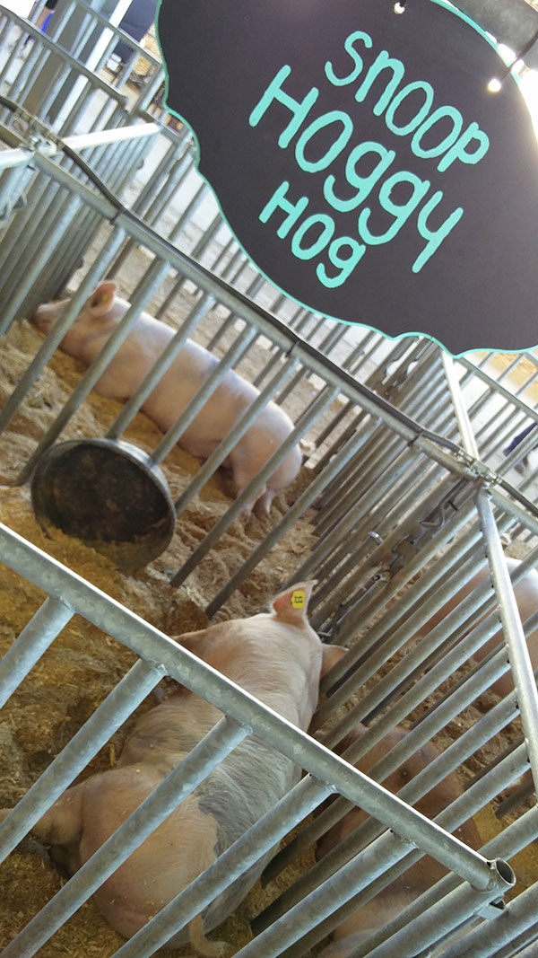 clay county fair animal exhibit