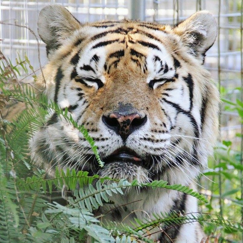 what's in tampa? big cat rescue